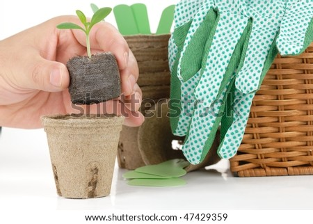 potting seedling in front gardening tools - stock photo