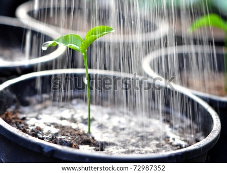 Pouring a young plant from a watering can - stock photo