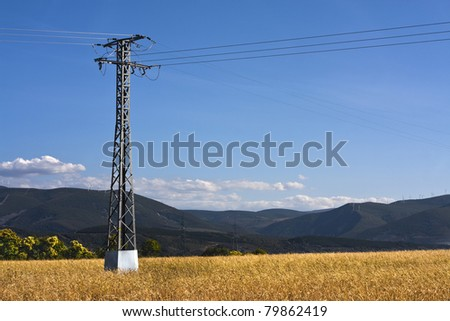 Power lines on a field of wheat