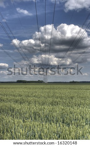 powerlines with wheat and clouds