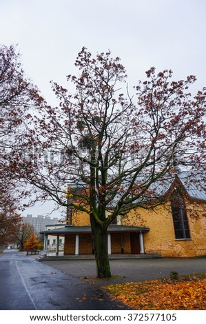 POZNAN, POLAND - NOVEMBER 07, 2015: Tree in front of a church at the Orla Bialego area on a cloudy rainy day