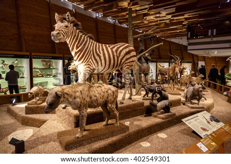 PRAGUE, CZECH REPUBLIC - JANUARY 1, 2016 : General view of mounted animals exhibited in Prague National Museum. - stock photo
