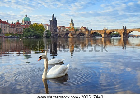 Prague. Image of Charles Bridge in Prague with couple of swans  in the foreground. - stock photo