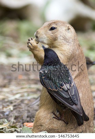 prairie dog sharing its lunch with a bird