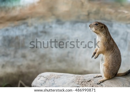 Prairie dog standing on branch