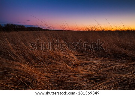 Prairie grass being lit by the sunset in the dusk lighting. - stock photo