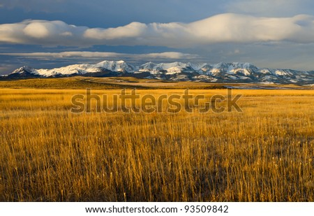 Prairie grasses, The Bridger Mountains and clouds in morning light, Park County, Montana, USA
