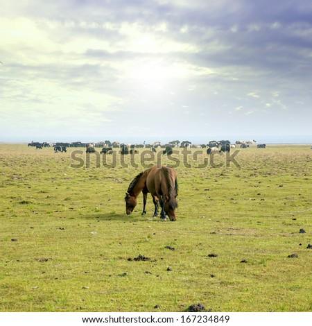 Prairie horse - stock photo