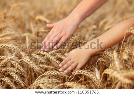 Praise and value mother nature feeding us - child and woman hand touching wheat - stock photo