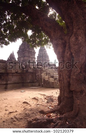 Prambanan Ruins, Java, Indonesia-Several temples in this ancient complex framed by an big old tree - stock photo