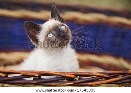 Precious little cat in a basket of wicker - stock photo