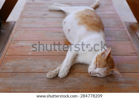 pregnant cats  - stock photo