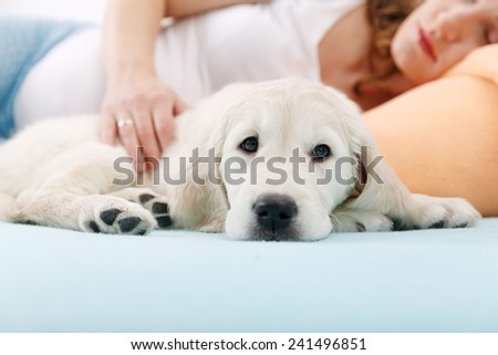Pregnant woman sleeping with golden retriever puppy at home - stock photo