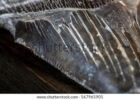 Megalodon Shark Stock Images, Royalty-Free Images & Vectors   Shutterstock