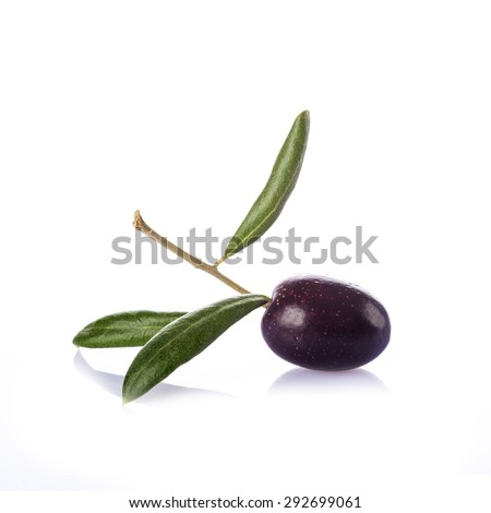 Premium raw olive with its leaves and branch on a white background