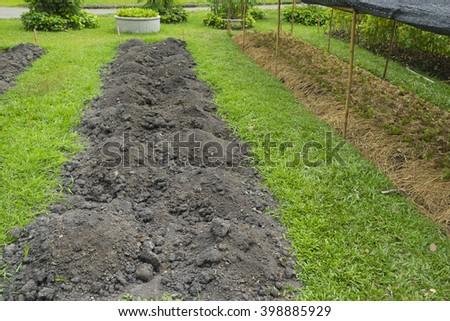 Prepare the soil for planting vegetables - stock photo