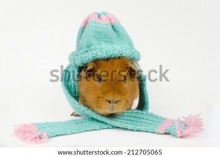 prepared for cold season - stock photo