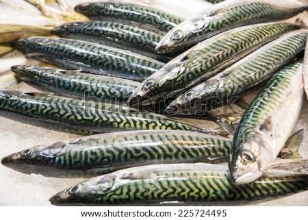 prepared for cooking fresh mackerel  - stock photo