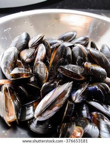 Prepared mussels, washed and ready for cooking. - stock photo