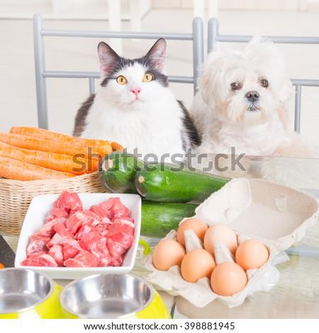 Preparing natural natural, organic food for pets at home - stock photo