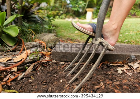 Preparing the garden bed for planting with a fork. Spring garden chores and jobs - stock photo