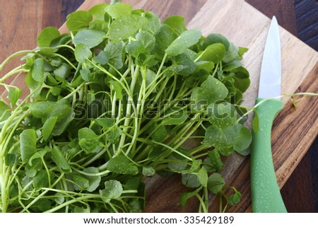 Preparing watercress for healthy salad on dark wood chopping board with paring knife.
