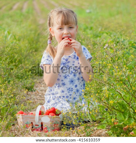 Preschool girl eating a big strawberry. Family time on self-picking farm, bright sun, summer. - stock photo