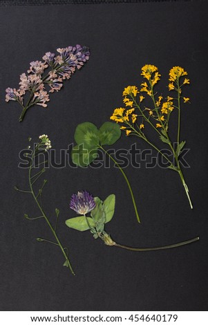 Pressed Flower Composition on black background - stock photo