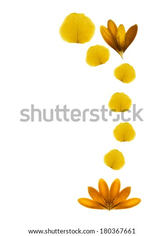Pressed flowers on white background. - stock photo
