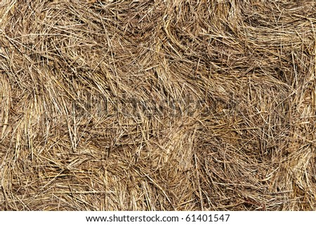 pressed straw - straw bales - surface - stock photo