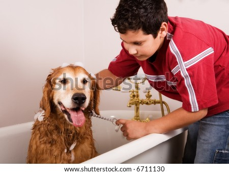 Preteen boy washing his golden retriever in the family bath tub. - stock photo