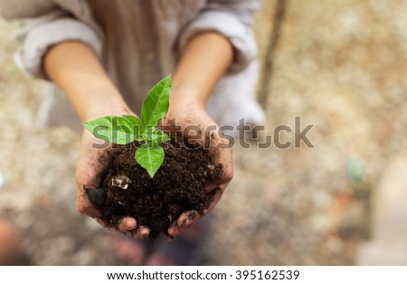 preteen girl hands holding little plant.  - stock photo