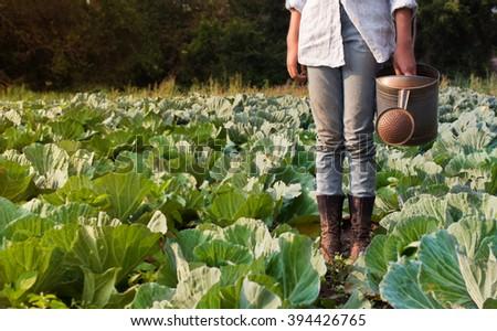 preteen girl watering cabbage field - stock photo