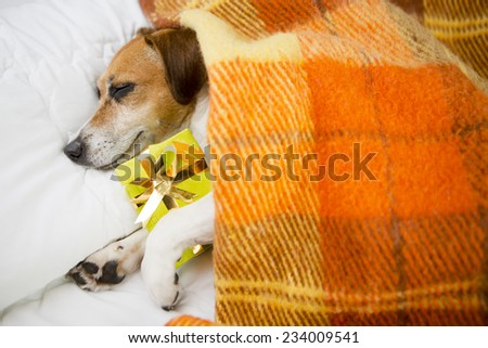 pretty beautiful dog sleeping in an embrace with a gift. Do not open until Christmas - stock photo