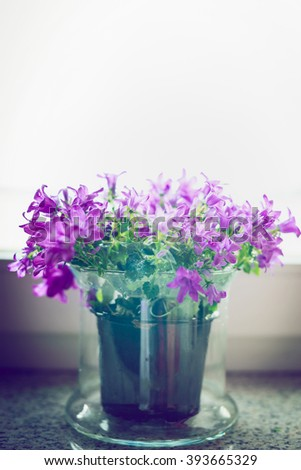 Pretty bell flowers in glass pot on windowsill. Home decoration