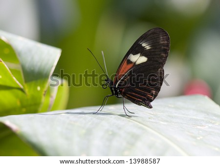 Pretty Butterfly - stock photo