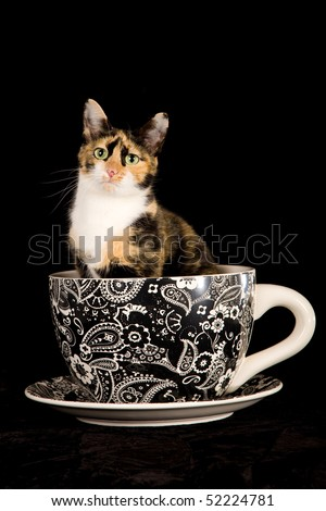 Pretty Calico cat in huge coffee cup on black background - stock photo