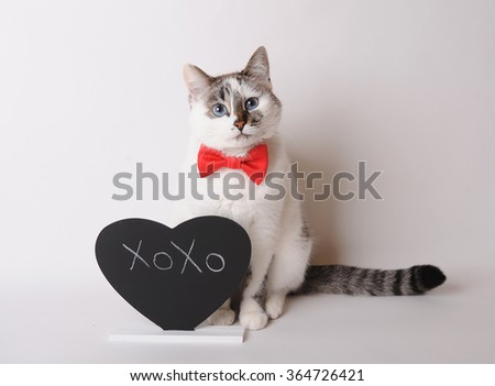 Pretty cat in red bow tie with inscription XOXO - stock photo