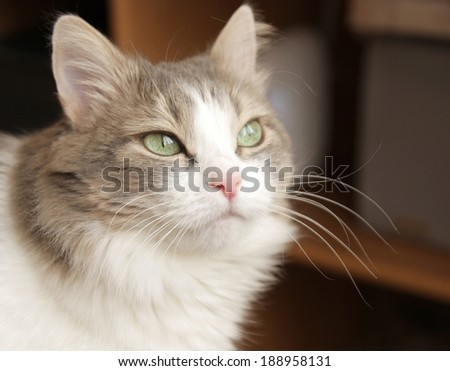 Pretty cat on the blurred background - stock photo