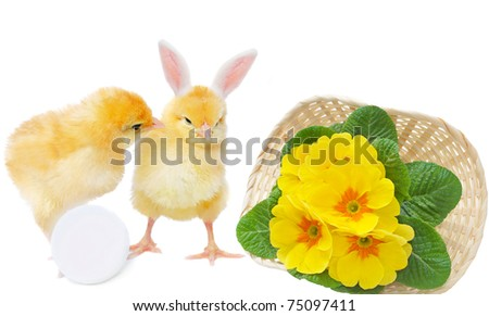 pretty chicken with egg and bizarre bunny with basket, isolated on white - stock photo