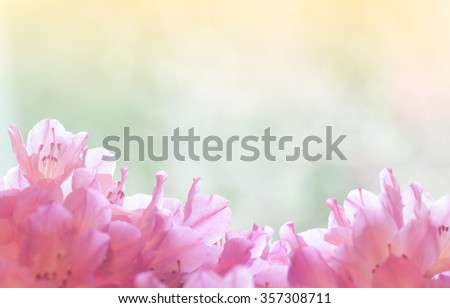 Pretty Colorful Pastel Pink Azalea Flower Bouquet on Bottom against Dreamy Green bokeh and Golden Sunshine Abstract Background with room, space above for copy, text, your words.  Horizontal instagram - stock photo