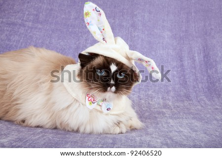 Pretty cute cat wearing cute easter bunny hat - stock photo