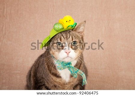 Pretty cute cat wearing easter hat - stock photo