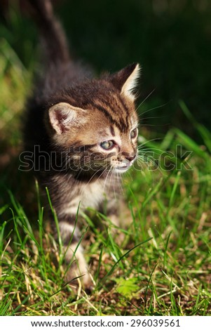 pretty cute striped cat walks in the grass