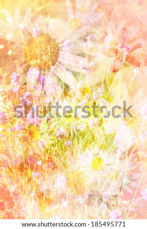 Pretty daisies beautiful artistic background in pink and cream  - stock photo