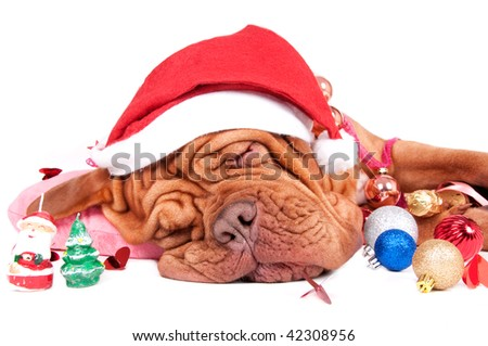Pretty dog felt asleep with Christmas deorations - stock photo