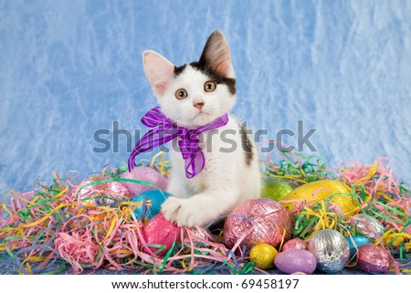 Pretty Easter kitten with eggs and colorful straw on blue background - stock photo