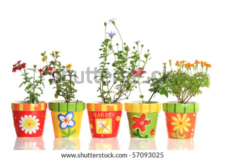 Pretty flowers in colorful pots. - stock photo