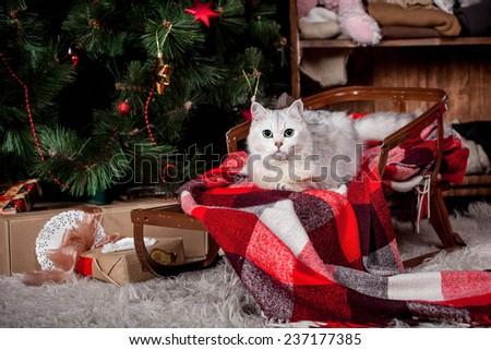 Pretty gray cat, holidays, christmas, new year - stock photo
