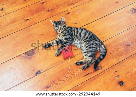 Pretty grey striped cat lying on a wooden floor with a red stuffed toy looking lazily at the camera, high angle with copyspace - stock photo